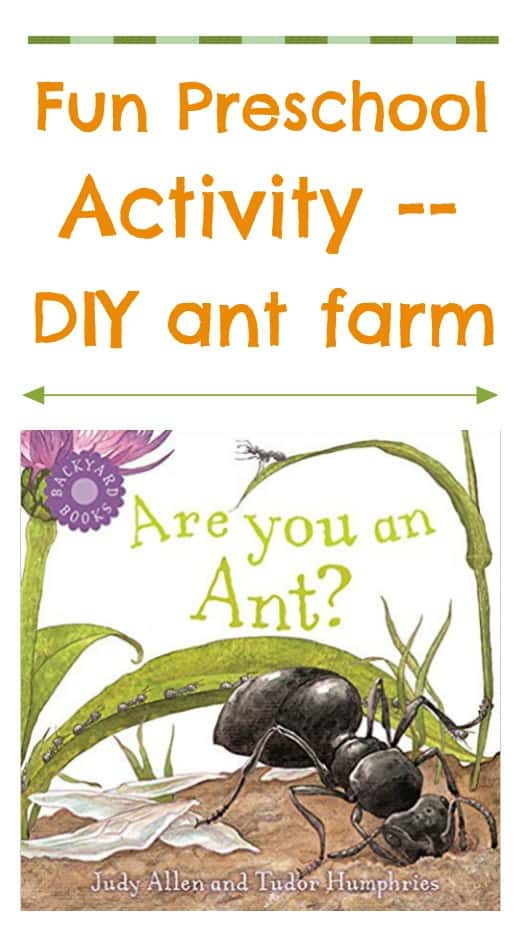 Fun preschool activity. How to make your own DIY ant farm. Easy science experiment for preschoolers.