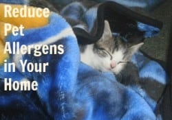 Reducing Pet Allergens in the Home