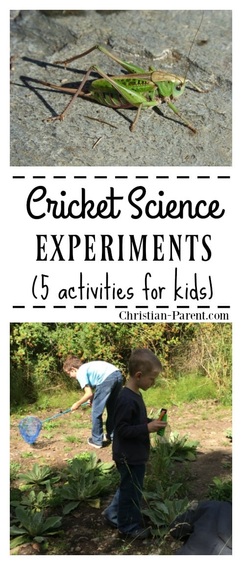 Five fun cricket science experiments for kids. Nature activities that are fun AND educational.