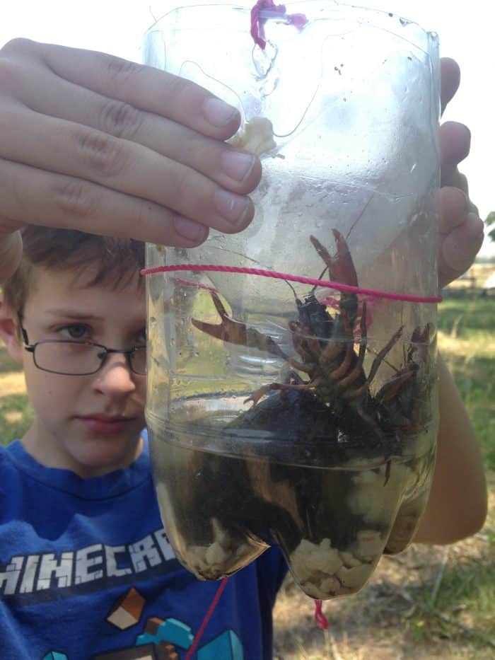 How to make and bait a DIY crawdad trap. Fun nature and science activity for kids.